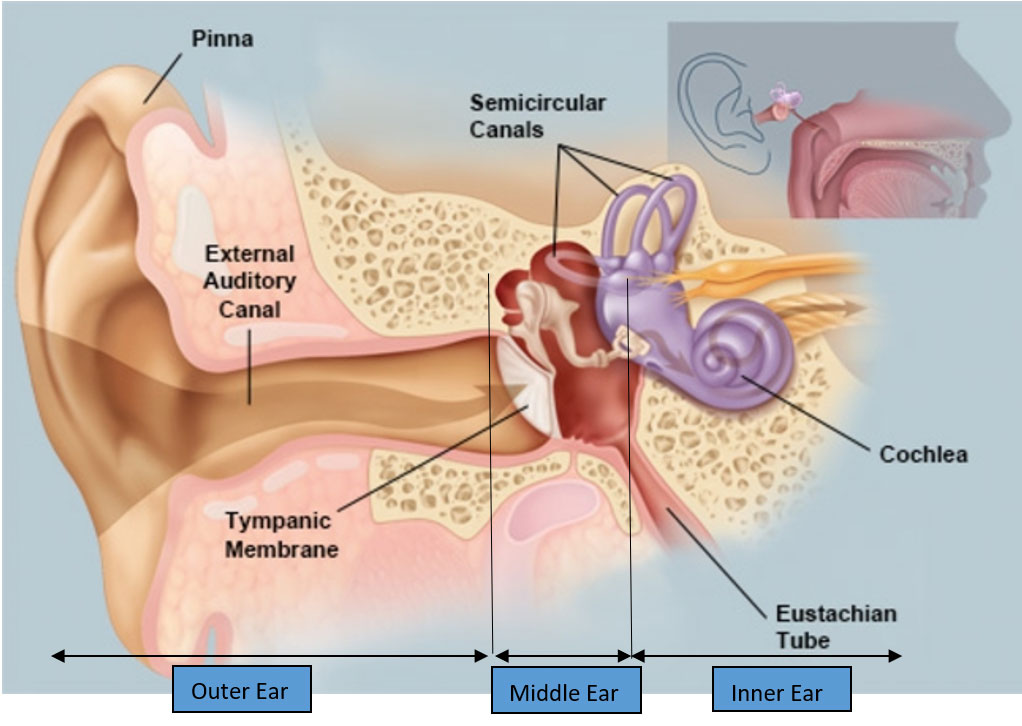 Figure 1: The Anatomy of the ear from the Audio Processing Perspective